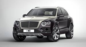 Картинка Bentley Серый Сером фоне CUV Роскошные Металлик Bentayga, Mulliner, 2017, «Deluxe suite» машины