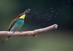 Фотография Птица На ветке Охотится European bee-eater, Moth животное
