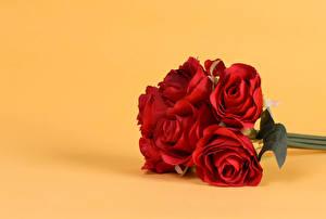 Картинка Букеты Роза Цветной фон Красный цветок