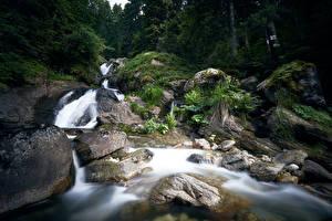 Картинка Болгария Лес Реки Камни Водопады Bistrica Waterfall