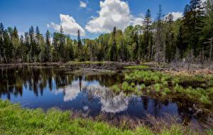 Обои Канада Парк Лес Дерево Forillon National Park Природа