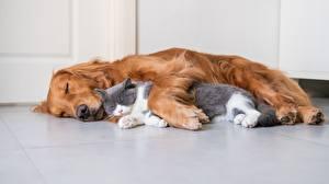 Обои Кот Собака Двое Спят Лежит животное