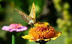 Картинки Вблизи Бабочка Размытый фон Животные