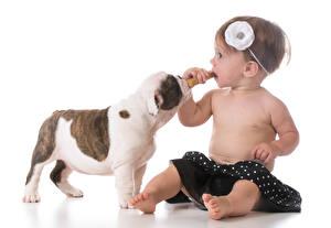 Фотография Собаки Белом фоне Девочка Сидит Щенки ребёнок Животные