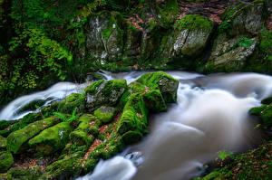 Фотографии Англия Леса Камень Речка Мха Ambleside, Lake District Природа