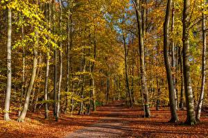 Фото Германия Осень Дороги Деревья Лист Eastern Eifel