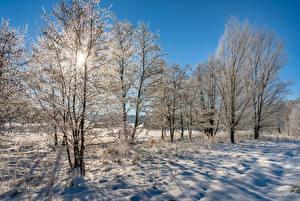 Обои Германия Зима Утро Снега Деревья Иней Mehren Природа