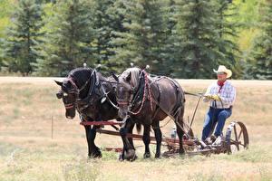 Фото Лошадь Мужчина Траве Работают Шляпы Очков Сидит животное