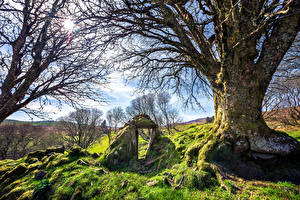 Картинка Ирландия Камни Деревья Мха Трава Солнце Ветвь Letterbarrow, Donegal Природа