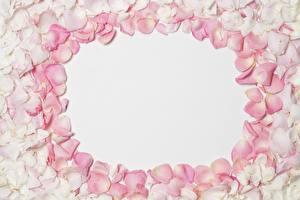 Картинка Роза Лепестки Шаблон поздравительной открытки цветок