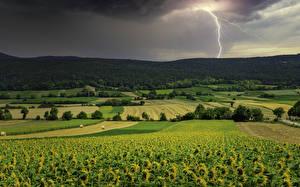 Картинка Пейзаж Поля Подсолнухи Молния Природа