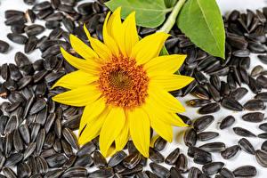Картинка Подсолнухи Семечки подсолнечника Вблизи Цветы
