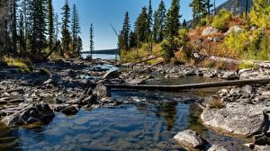Фото Америка Осенние Камень Парк Дерево Grand Teton national Park, Wyoming