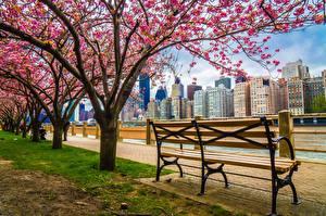 Фотографии Штаты Цветущие деревья Здания Нью-Йорк Набережной Скамья HDRI город