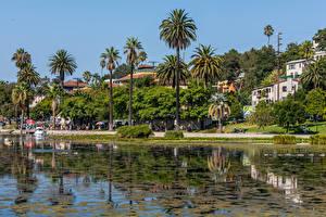 Картинки Штаты Здания Озеро Побережье Калифорния Лос-Анджелес Пальм Echo Park Lake Города