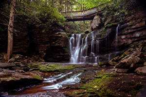 Обои США Парки Мосты Водопады Камни Деревья Мох Blackwater Falls State Park