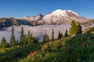 Фотографии Штаты Парки Гора Дерева Трава Mount Rainier National Park