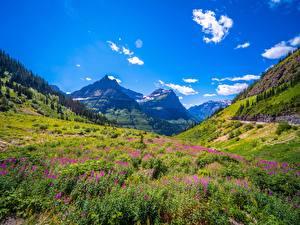 Обои Штаты Парки Горы Небо Траве Glacier National Park Природа