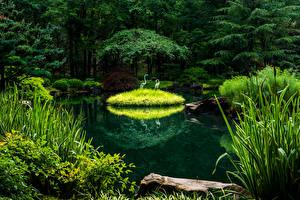 Картинки США Парк Пруд Дизайн Дерева Gibbs Gardens Природа