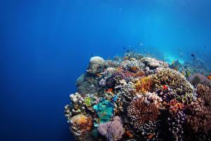 Обои для рабочего стола Подводный мир Кораллы Рыбы животное