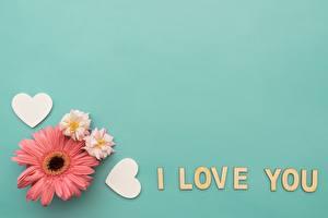 Картинки День всех влюблённых Гербера Шаблон поздравительной открытки Английская Слова Сердечко цветок