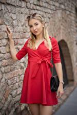 Обои Блондинки Позирует Платье Стена Смотрит Alina девушка