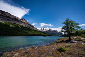 Фотографии Аргентина Горы Озеро Деревья Laguna Hija Природа
