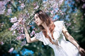 Обои Азиатка Ветки Шатенки Рука Платье Боке Сакура