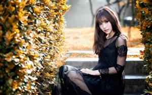 Фото Азиатка Кустов Шатенки Платья Взгляд Сидящие девушка