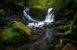 Обои Австралия Парк Водопады Камни Мха Mount Field National Park