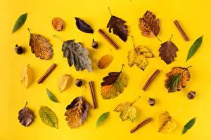 Картинки Осенние Корица Листья Жёлудь Природа
