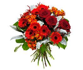 Фотография Букеты Гербера Розы Хризантемы Белым фоном Красный цветок