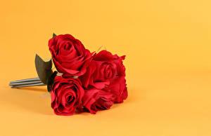 Фото Букеты Розы Цветной фон Красный цветок