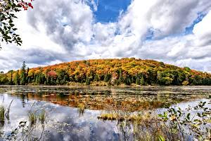 Фотография Канада Осенние Леса Озеро Ontario