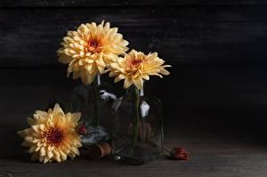 Фотография Хризантемы Букет Ваза Бутылки Цветы