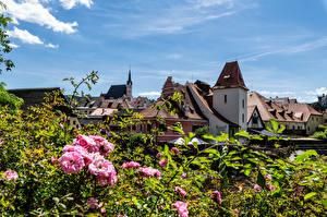 Картинки Чехия Дома Цветущие деревья Крыша Cesky Krumlov город