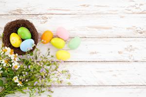 Картинки Пасха Шаблон поздравительной открытки Доски Яйцо Гнездо