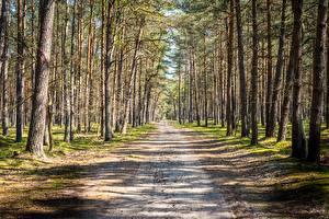 Картинки Лес Дороги Дерево Природа