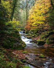 Фотографии Германия Осень Лес Мост Камни Ручеек Деревья Мха Black Forest, Baden-Baden