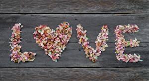 Фотография Любовь День всех влюблённых Текст Английская Карандаш Сердце shavings