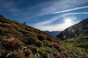 Обои Горы Небо Рододендрон Солнца Солнце Pyrenees Природа