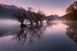 Обои Новая Зеландия Осенние Озеро Гора Туман Деревьев Glenorchy, Lake Wakatipu Природа