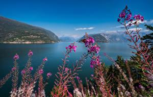 Картинка Норвегия Горы Небо Hardangerfjord