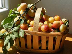 Обои Сливы Много Корзинка Ветвь Cherry plum Еда