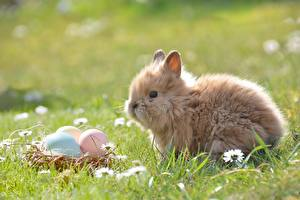 Картинка Кролик Пасха Траве Яйцо животное
