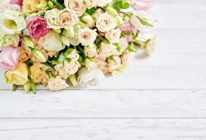 Фотография Роза Букеты Доски Шаблон поздравительной открытки цветок