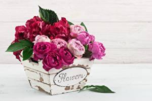 Фотографии Роза Букеты Слово - Надпись Английская цветок