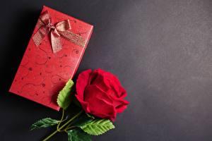 Фотография Роза Шаблон поздравительной открытки Подарок Бант
