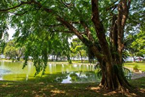 Обои для рабочего стола Сингапур Парки Пруд Дерево East Coast Park Природа