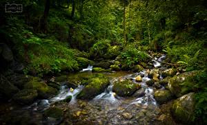 Фотографии Испания Леса Камни Дерева Мхом Ручеек Asturias